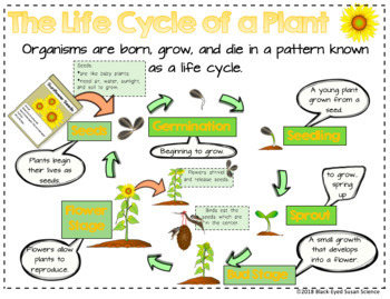 The Life Cycle of a Plant Primary Doodle Notes NGSS 3-LS1-1