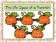 The Life Cycle of a Pumpkin {A Freebie!}