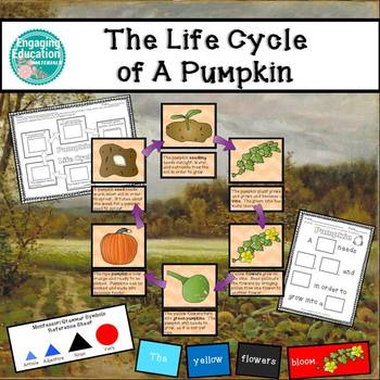 The Life Cycle of a Pumpkin Differentiated Activities