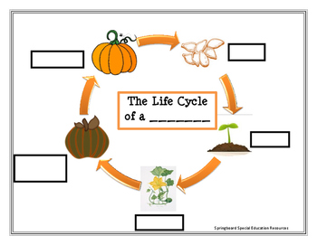 The Life Cycle of a Pumpkin (Extended Version)
