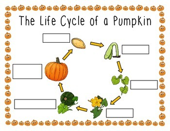 The Life Cycle of a Pumpkin Poster & Labeling Activity