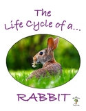 The Life Cycle of a Rabbit Package