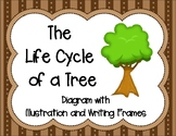 The Life Cycle of a Tree Diagram with Illustration and Writing Frames