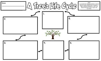 The Life Cycle of a Tree Illustration Frames