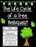The Life Cycle of a Tree Webquest