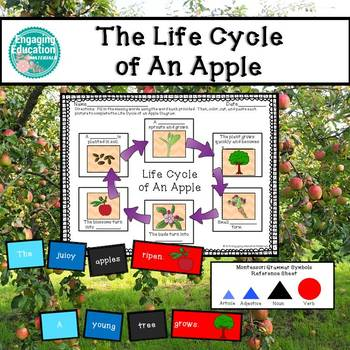 The Life Cycle of an Apple Literacy Activities