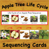 The Life Cycle of an Apple Tree Sequencing Cards