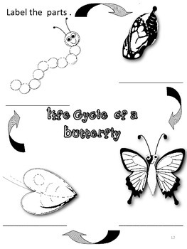 The Life Cycle of the Butterfly