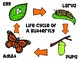 The Life Cycle of the Butterfly and Insect Connections