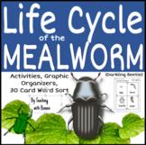 The Life Cycle of the Mealworm (Darkling Beetle) Metamorphosis