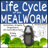 The Life Cycle of the Mealworm (Darkling Beetle)