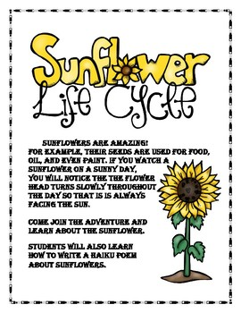 The Life Cycle of the Sunflower Lapbook
