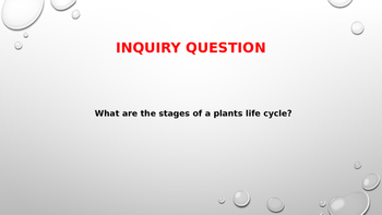 The Life Cycle of the plant