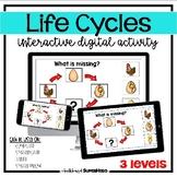 The Life Cycles interactive digital activity