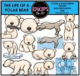 The Life Of A Polar Bear Clip Art Bundle {Educlips Clipart}