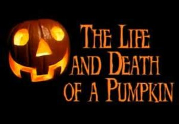 The Life and Death of a Pumpkin