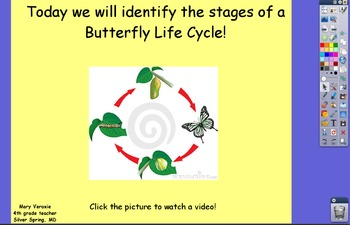 The Life Cycle of a Butterfly Flipchart