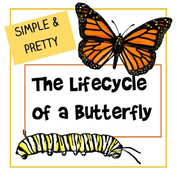 The Lifecycle of a Butterfly - Simple & Pretty Diagram