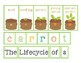 The Lifecycle of a Carrot Craftivity