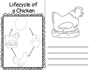 The Lifecycle of a Chicken