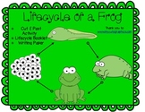 The Lifecycle of a Frog