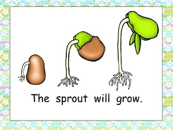 The Little Seed- Plant Life Cycle Shared Reading for Kindergarten Spring