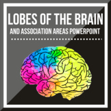 The Lobes of the Brain and Association Areas