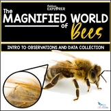 The Magnified World of Bees - Elementary Science Inquiry