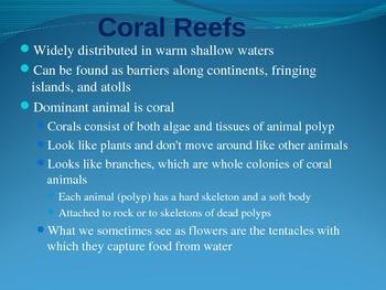 The Marine Biome PowerPoint