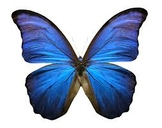 The Mariposa Song