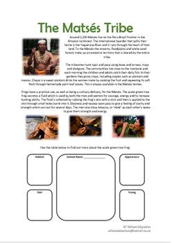 The Matses Tribe