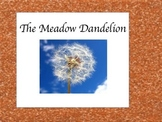 The Meadow Dandelion