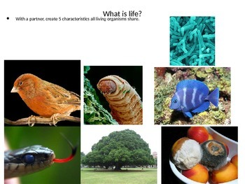 The Meaning of Life and the Classification of It