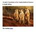 The Meerkat Handout