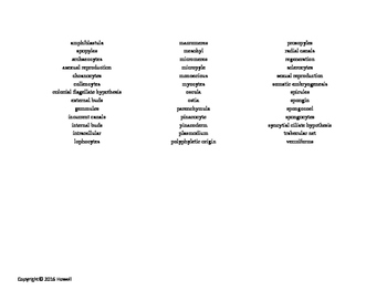 The Mesozoa and Parazoa Vocabulary Word Search for Zoology