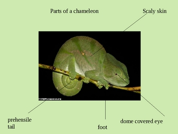 The Mixed Up Chameleon Power Point