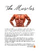 Physiology: The Muscles