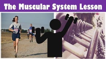 The Muscular System No Prep Lesson with Power Point, Works