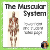 The Muscular System SMART notebook presentation
