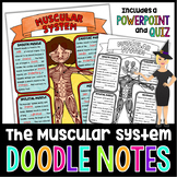 The Muscular System Doodle Notes | Science Doodle Notes