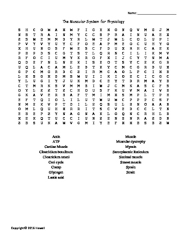 The Muscular System Vocabulary Word Search for Physiology