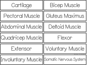 The Muscular System {WORD WALL}