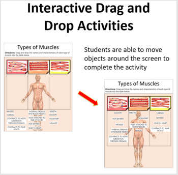 The Muscular and Skeletal System - Digital Interactive Notebook Pages