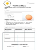The Naked Egg: An Engaging Scientific Inquiry Experiment