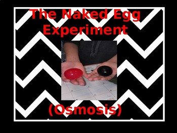 The Naked Egg Experiment
