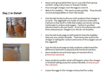 The Naked Egg Science Lab - Teach Chemical Reactions and Osmosis Through Labs