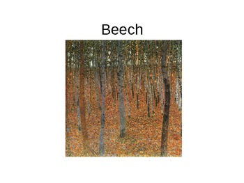 The Names of Trees Lesson