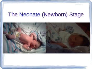 The Neonate (Newborn) Stage - Middle School edition