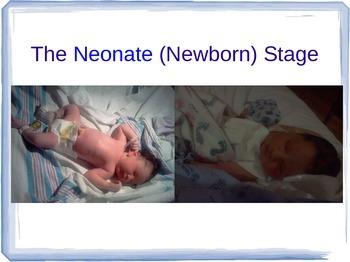 The Neonate / Newborn Stage PowerPoint for Child Developme