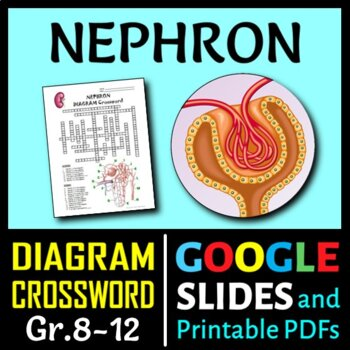 Nephron Crossword with Diagram {Editable}